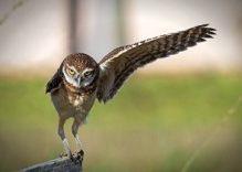 Bird Watching Tours: 10 days Best Kenya Bird watching safaris
