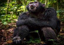 3 days gorilla tracking Safari Uganda