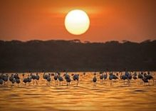 7 days Kenya Honeymoon Packages