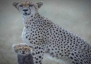 3 Days Masai Mara Joining Safari (Luxury Group Tour)