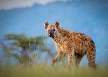 Samburu flying safari: 3 days Samburu Kenya air safari