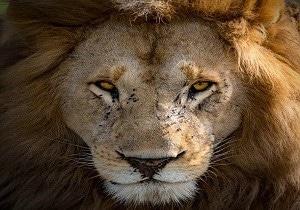 Kenya safari travels