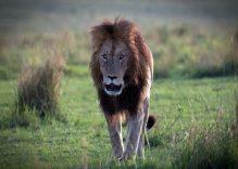 Africa Photography Safaris: 10 days Kenya Best Safari Photography