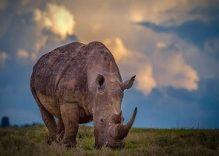 Africa Safaris Kenya Tours