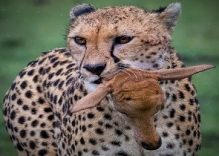 3 days Private Tanzania Luxury Serengeti safari (Flight)