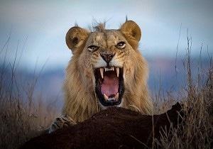 camping Kenya safari