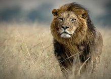 Masai Mara: The world's natures paradise