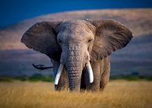 Amboseli Flying safari Kenya: 3 days Amboseli Kenya flying Tour