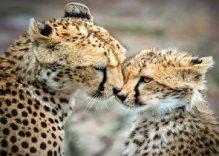 6 day Kenya group safaris tour (camping)