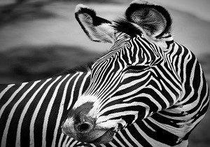 Kenya safari Group Tour: 7 day budget Tour