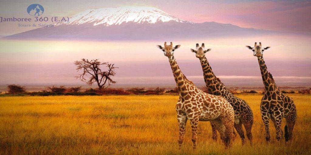 Most beautiful wildlife safari