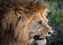 4 days Private Masai Mara camping Safari