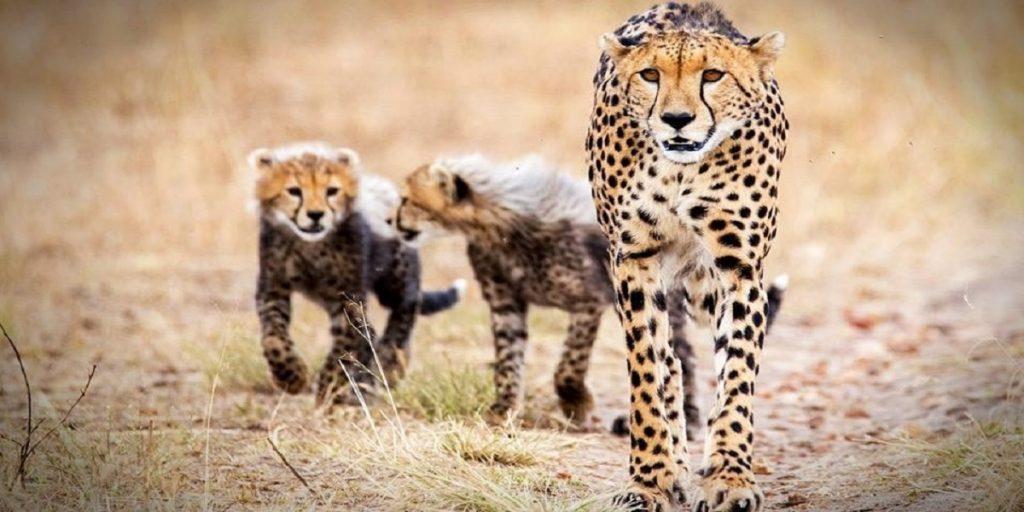 Do's for perfect safari photo