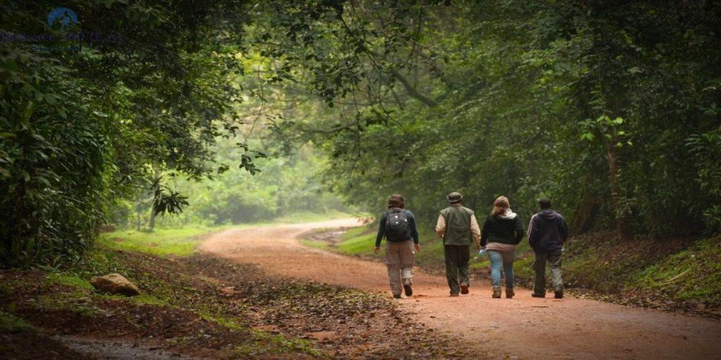 kakamega forest trekking tours in kenya