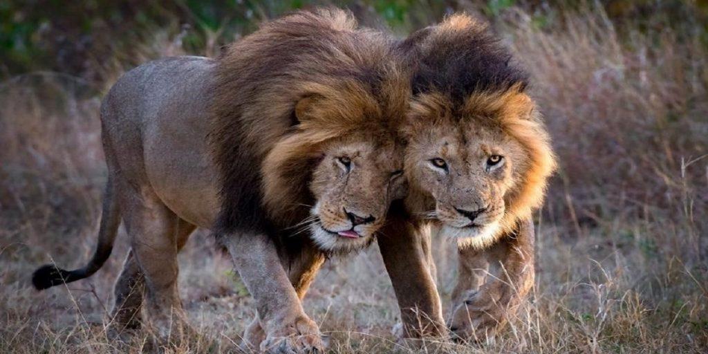 Kenya Tourist Security