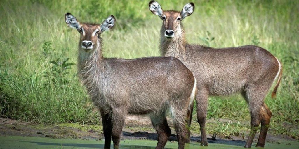 Top 4 Wildlife Safari destinations