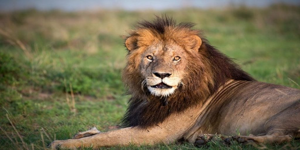 Book All Safaris with the Best Tour Operator in Africa