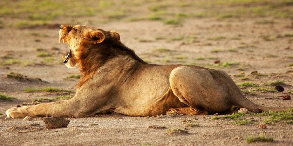 Tour company safari reviews