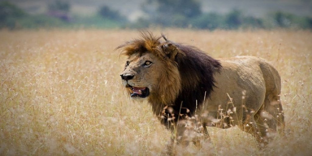 Safari Bookings Terms