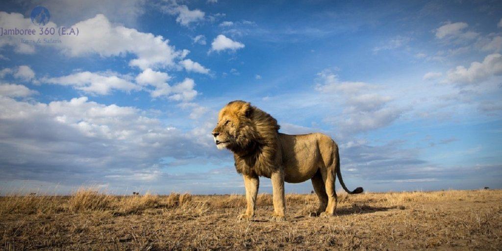 Kenya Safari Travel