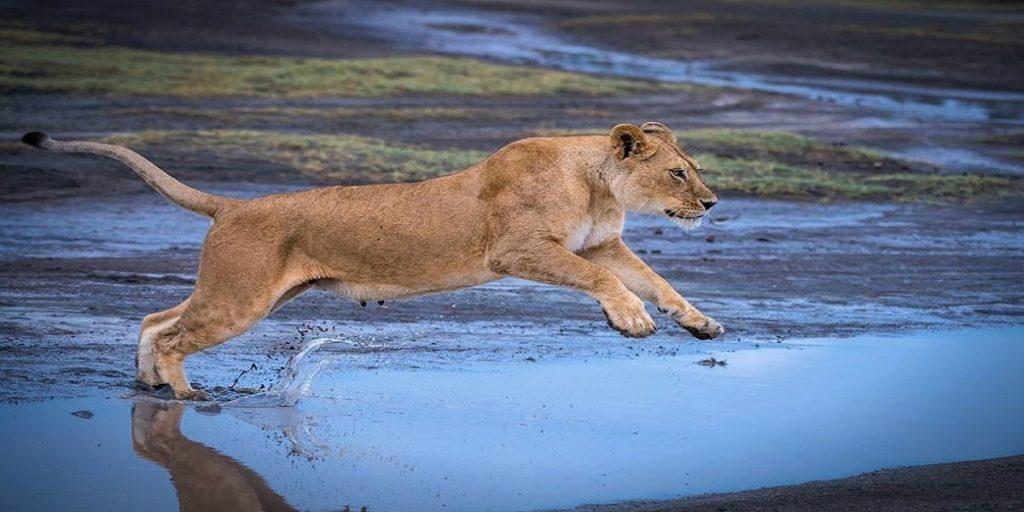 Tanzania budget safari tours