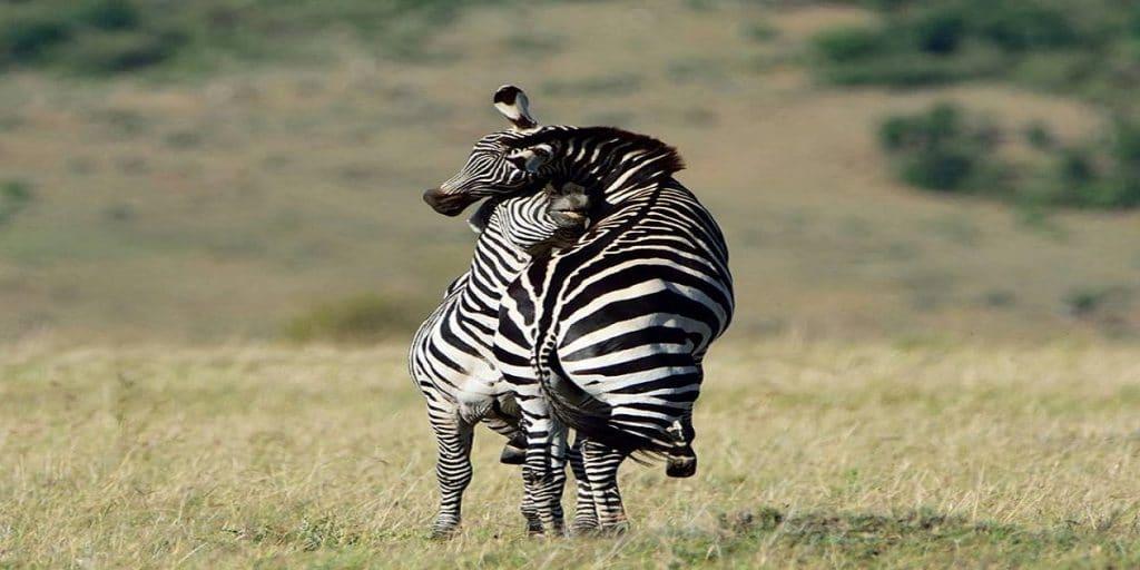 africa safaris