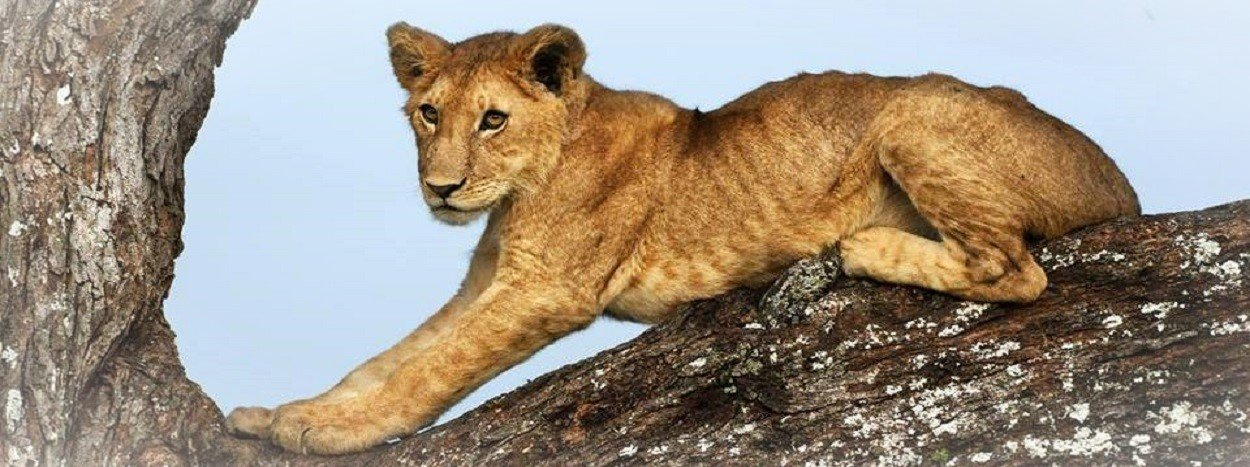 http://www.jamboreetours.com/wp-content/uploads/2019/05/top-slide-Serengeti-safari.jpg