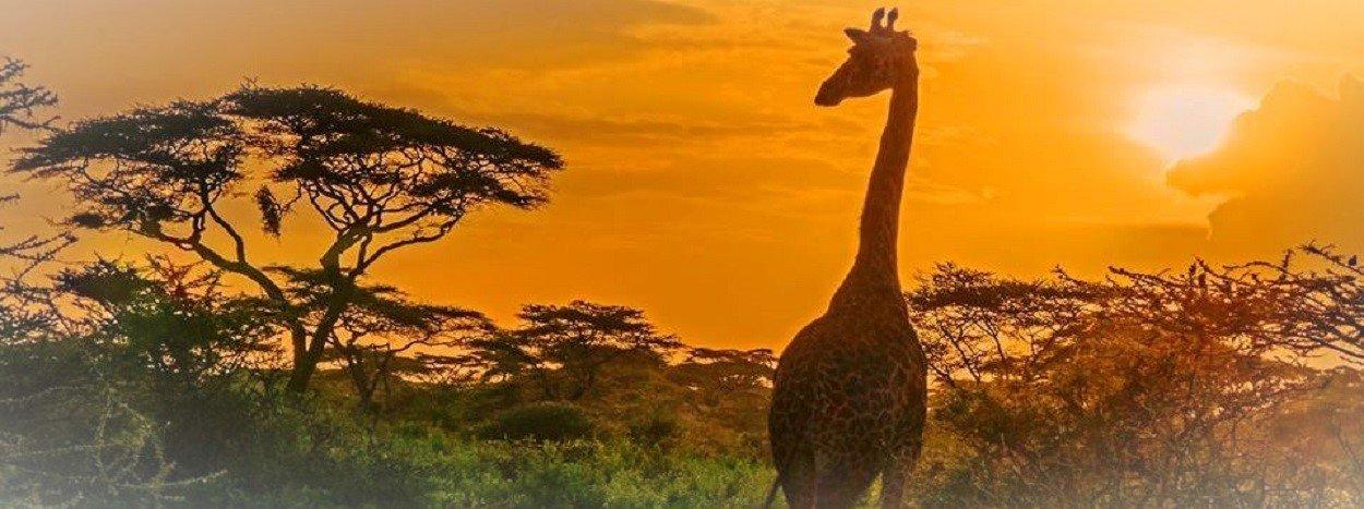 http://www.jamboreetours.com/wp-content/uploads/2019/05/top-slide-giraffe-kenya-safaris.jpg