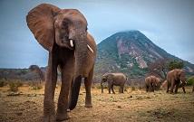 Amboseli private trips