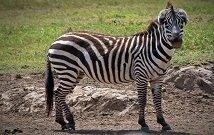 Samburu luxury safaris