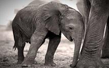 Amboseli private safaris