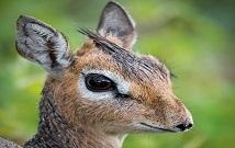 Best Masai Mara safaris