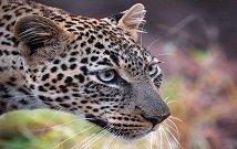 Best Masai Mara day trips
