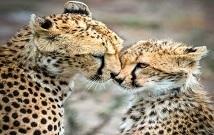 Best safaris in Masai Mara Kenya