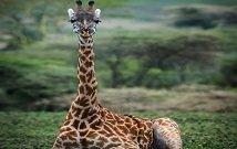 Best masai mara tours
