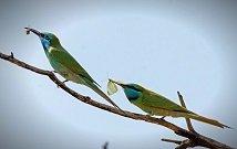 Best Bird watching tours in Kenya