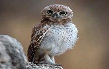 Best bird watching safaris in Kenya