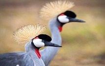 Budget safari Kenya