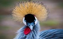 kenya Birding safaris