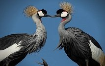 Best birding safaris in Kenya