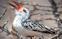 Birding tours Kenya