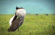 Kenya bird watching tours