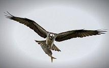 Kenya Bird watching safaris