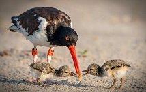 Best Birding tours in Kenya