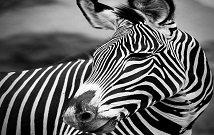 Amboseli Kenya Tour