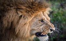 Best kenya safaris in Amboseli