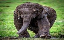 trip to Naivasha
