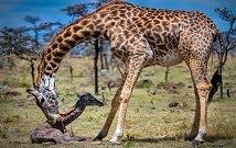 Amboseli safaris in Kenya