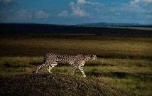 Kenya Luxury safaris