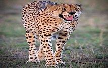 Samburu private safari tours